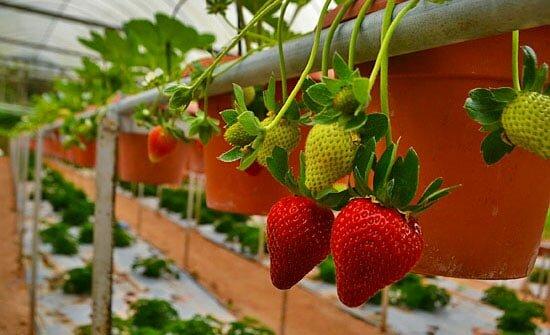 Ярусное выращивание