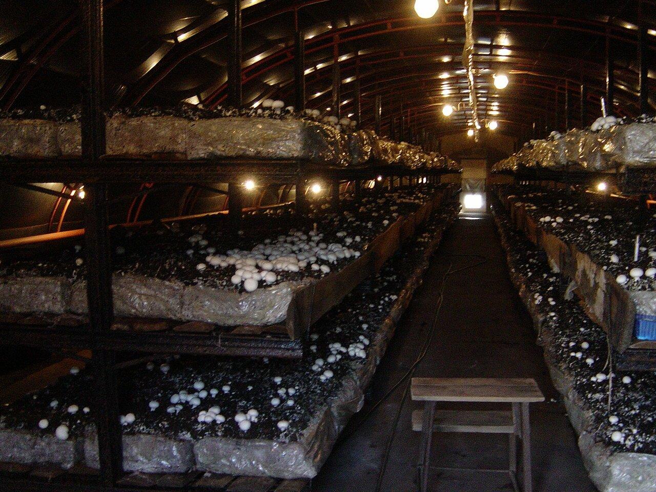 УМДИС : рынок грибов Украины 26