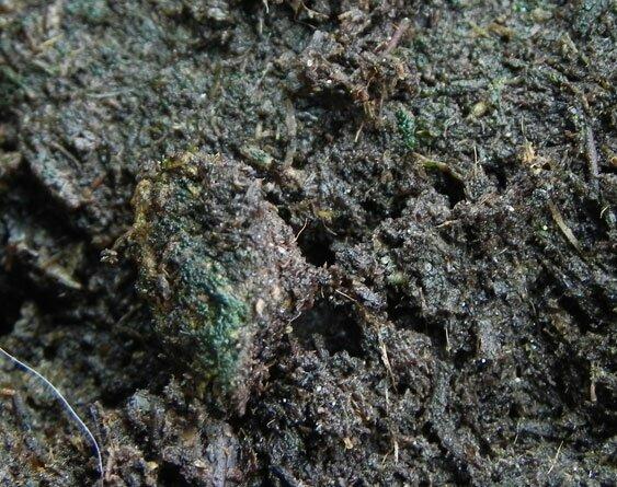 Позеленение почвы