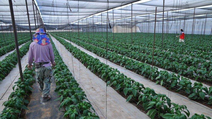 Промышленное выращивание