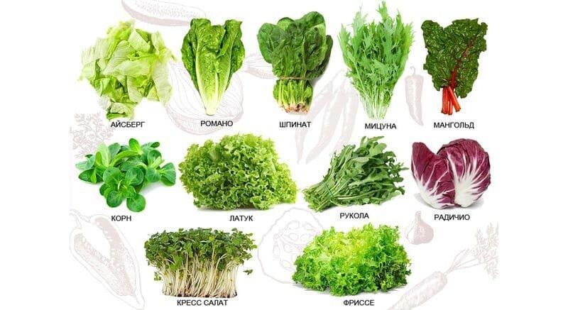 Виды салата