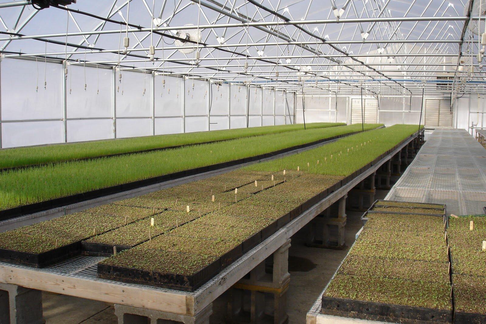 Бизнес по выращиванию зеленого лука 55