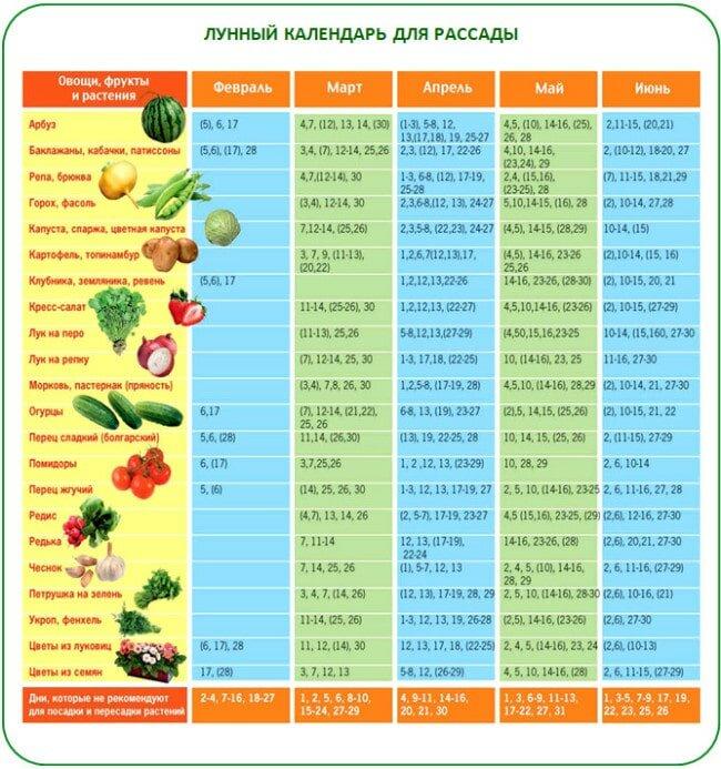 Лунный календарь посадки томатов на рассаду в 2017 году