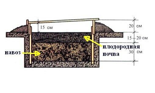 Схема укладки навоза