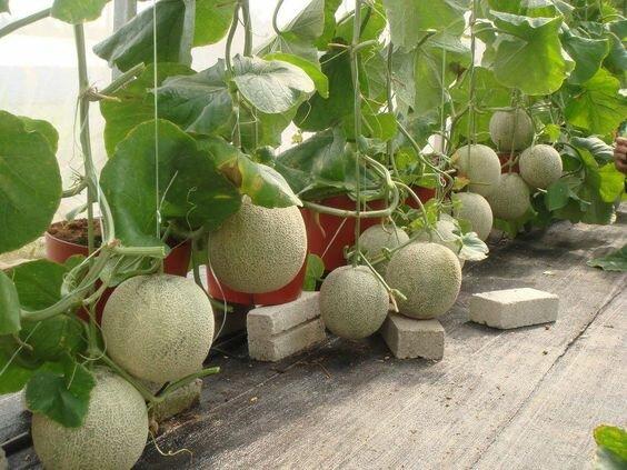 Выращивание с применением системы гидропоники