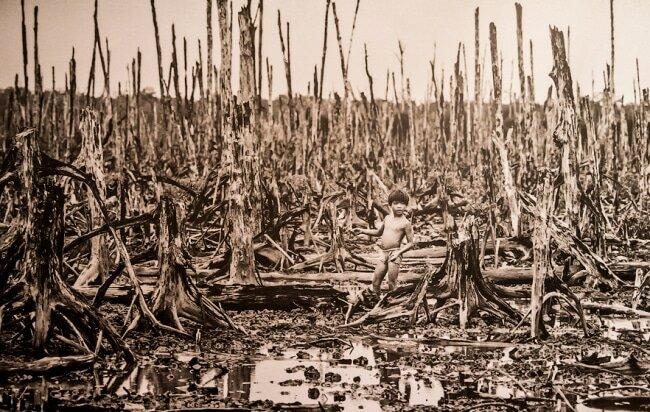 Джунгли во Вьетнаме погибли