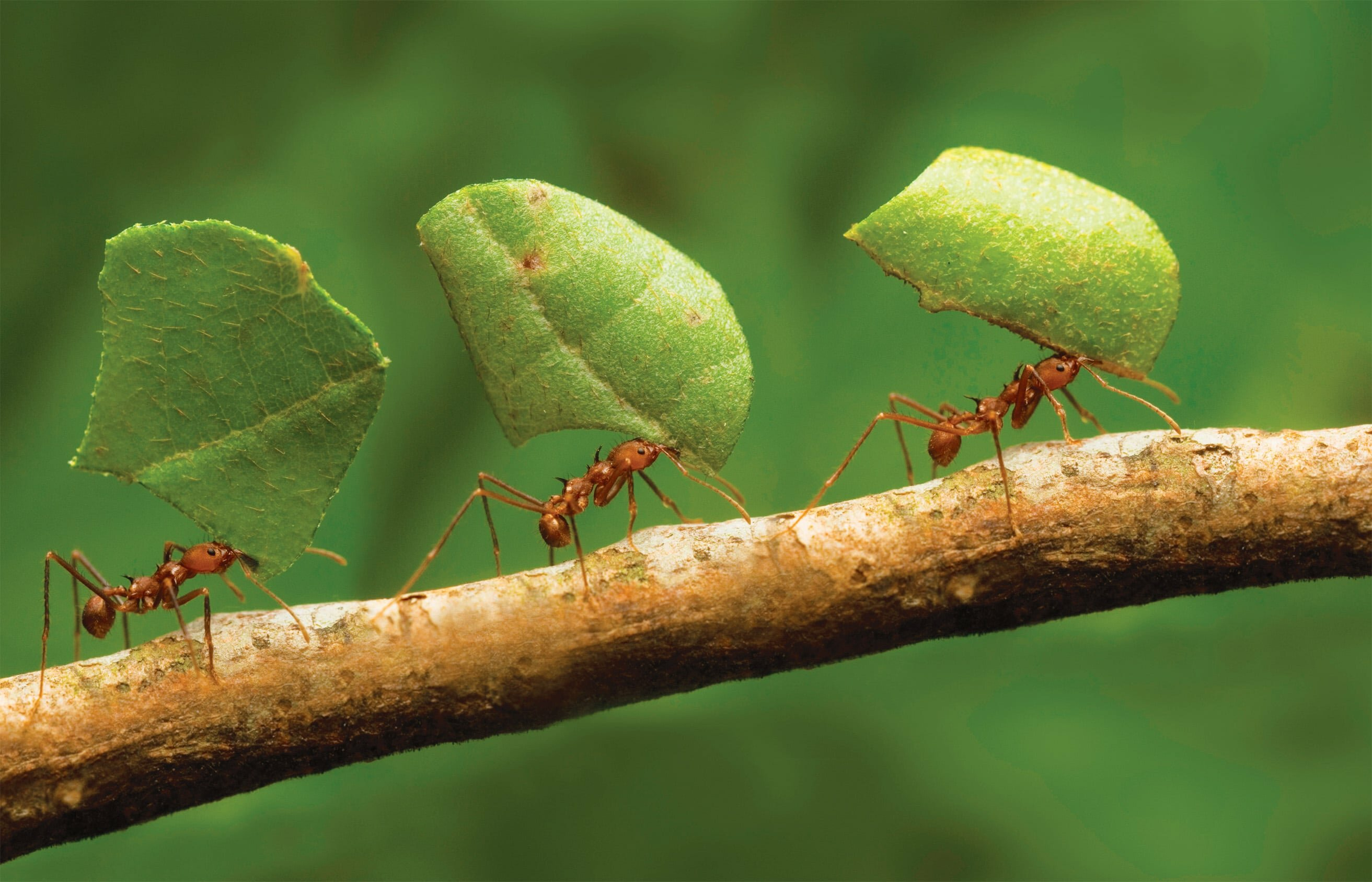 Как избавиться от муравьев в теплице навсегда - средства и препараты
