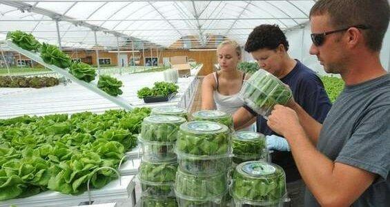 Выращивание овощей как бизнес с чего начать как преуспеть 3