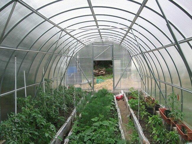 Совместное выращивание овощей