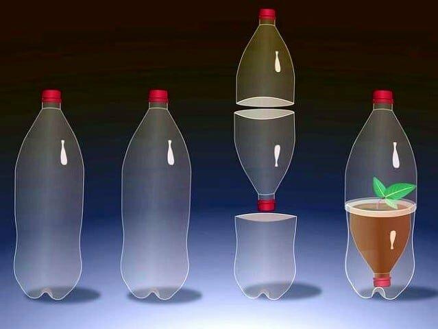 Рассада в бутылке