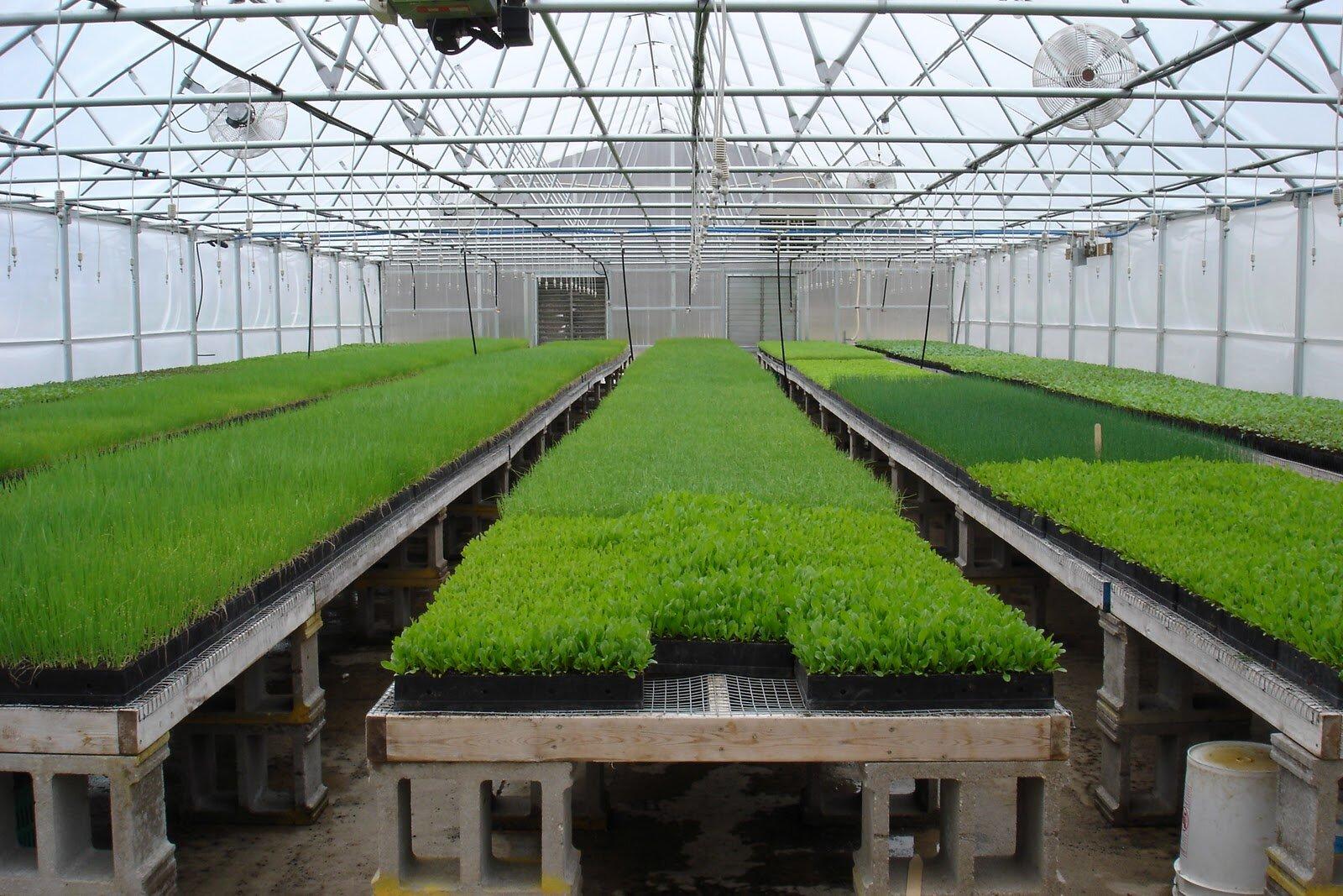 впрочем, Выращивание зелени в подвале круглый год самом деле