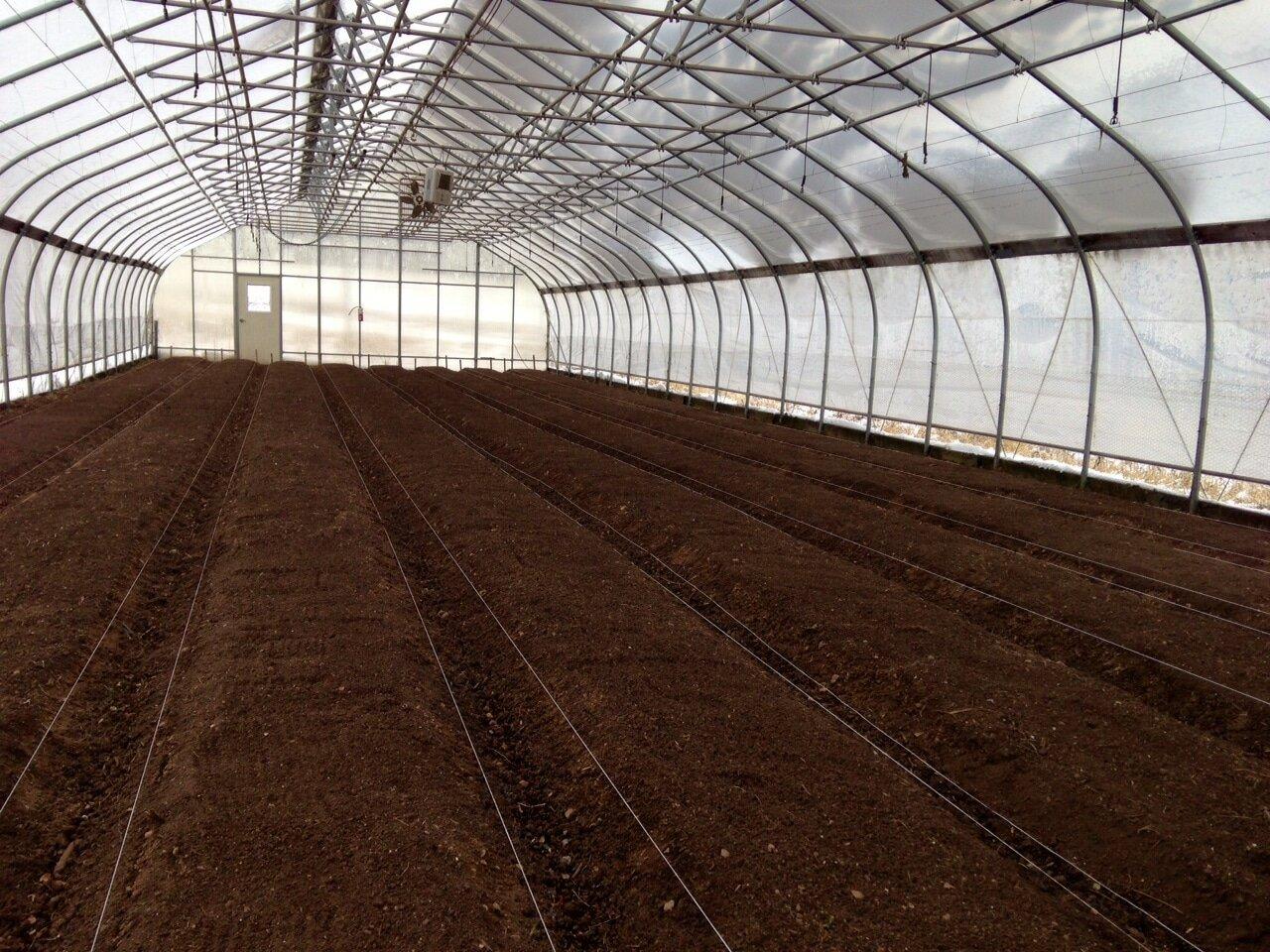 Успешное выращивание огурцов зимой в теплице – технические моменты и агротехника