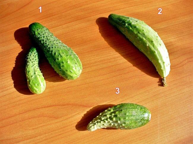 Признаки дефицита питания на плодах