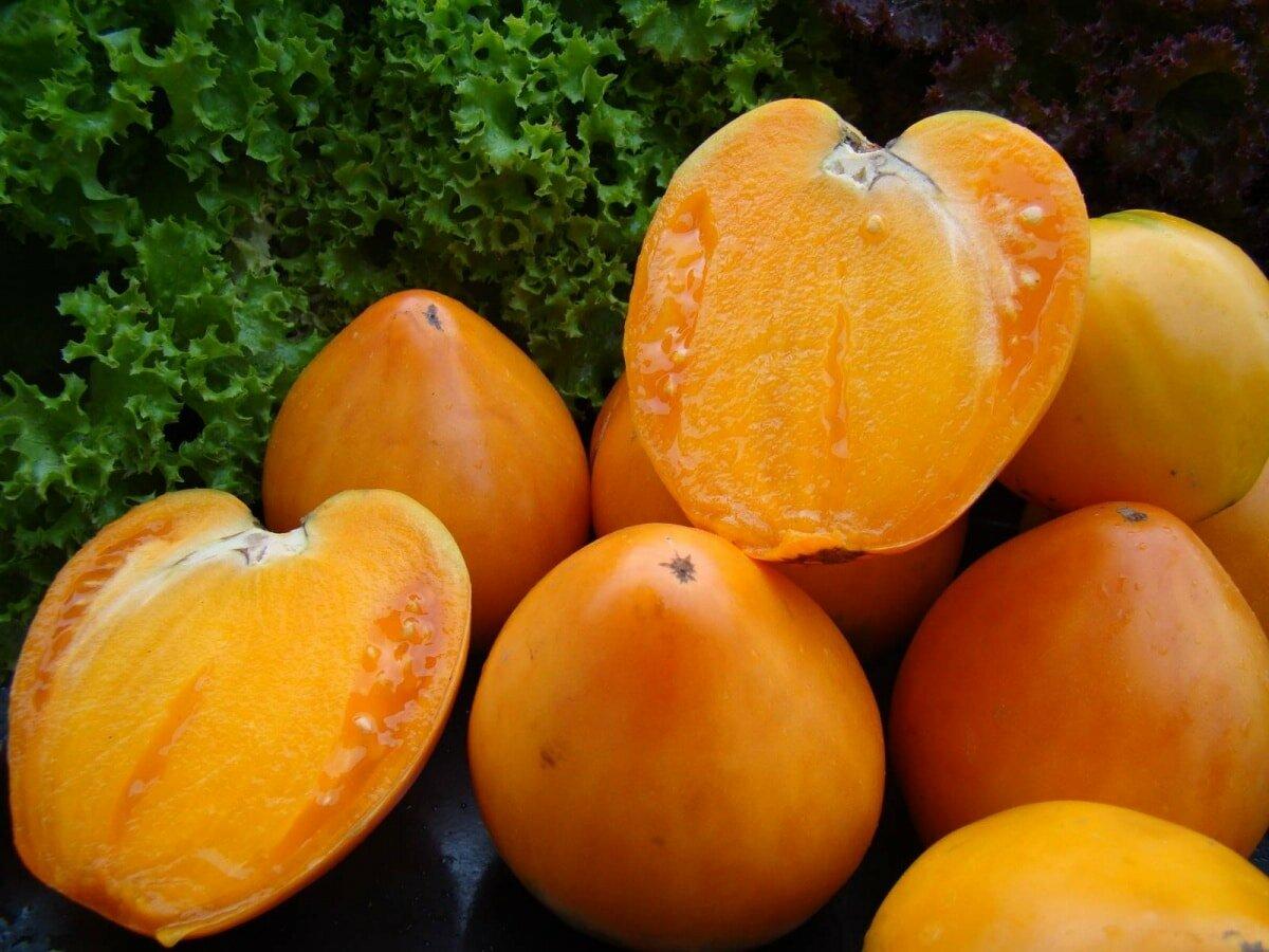 Томат алтайский оранжевый отзывы фото кто сажал