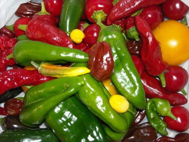 Разнообразие сладких перцев