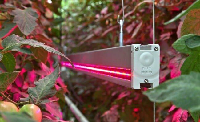 LED-светильник  рядом с растением