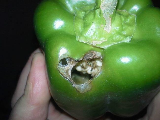 Повреждение перца